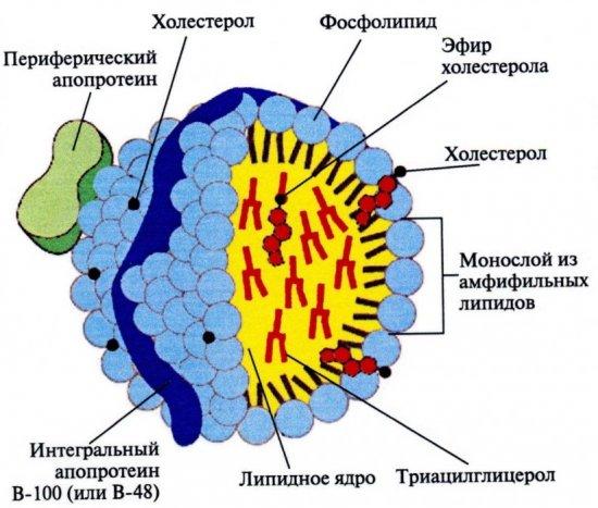 Хиломикроны